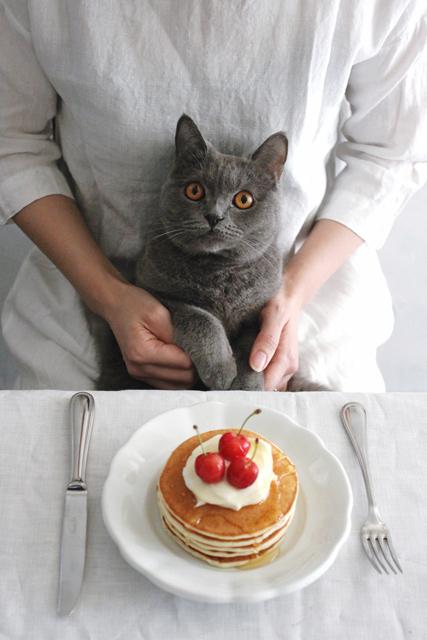 猫とパンケーキ写真
