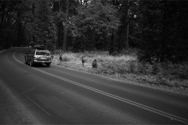 ヨセミテ国立自然公園の道路